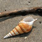 Seashell on the sand and ocean 2 by Anton Oparin