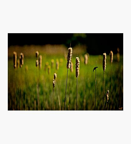 ♫♪ ♪♫ Green Grow The Rushes O ♫♪ ♪♫ Photographic Print