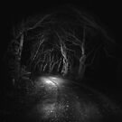 Enchanted Woods by Leanne Robson