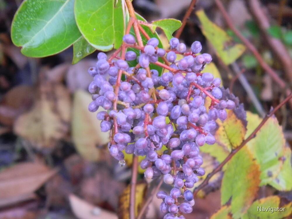 Wild Berries by Navigator