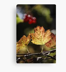 West Sweden Autumn colour Canvas Print