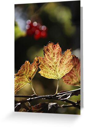 West Sweden Autumn colour by Jeanne Horak-Druiff