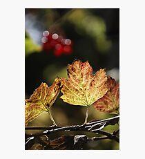 West Sweden Autumn colour Photographic Print