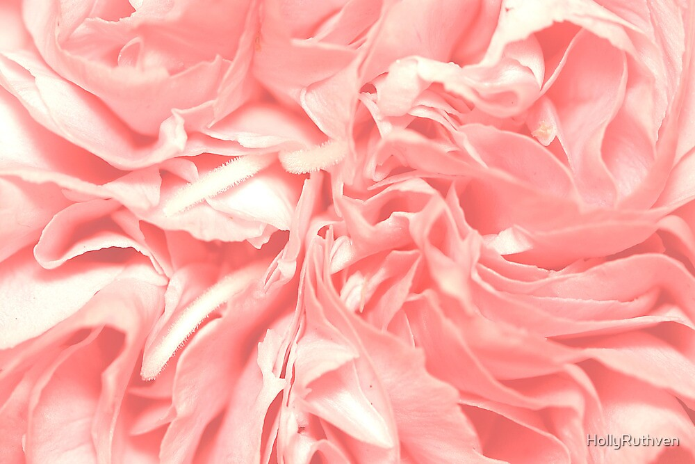 Petals in Pink by HollyRuthven