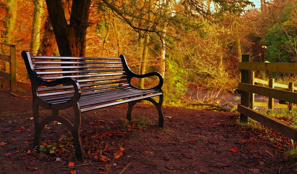 Bench - Linn Park by CraMation