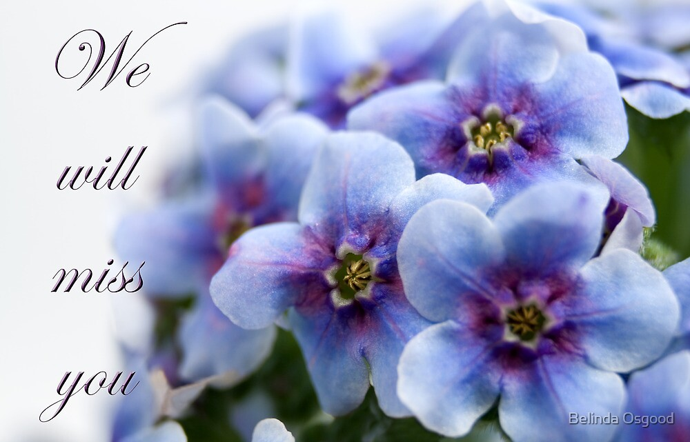"""""""We will miss you"""" forget-me-not flower by Belinda Osgood"""