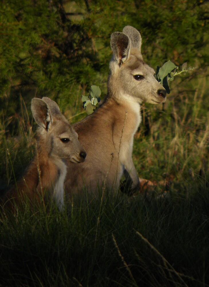 Euro & Joey - Cape Range National Park, Western Australia by Dan Monceaux