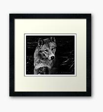 Cutey dingo in b/w Framed Print