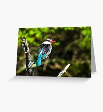 Malachite Kingfisher Grußkarte