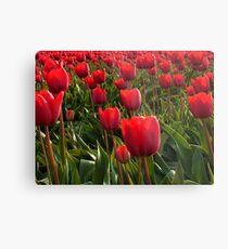 A field full Red Tulips Metal Print