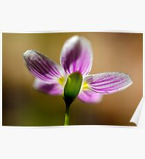 Spring Beauty - From Behind Poster