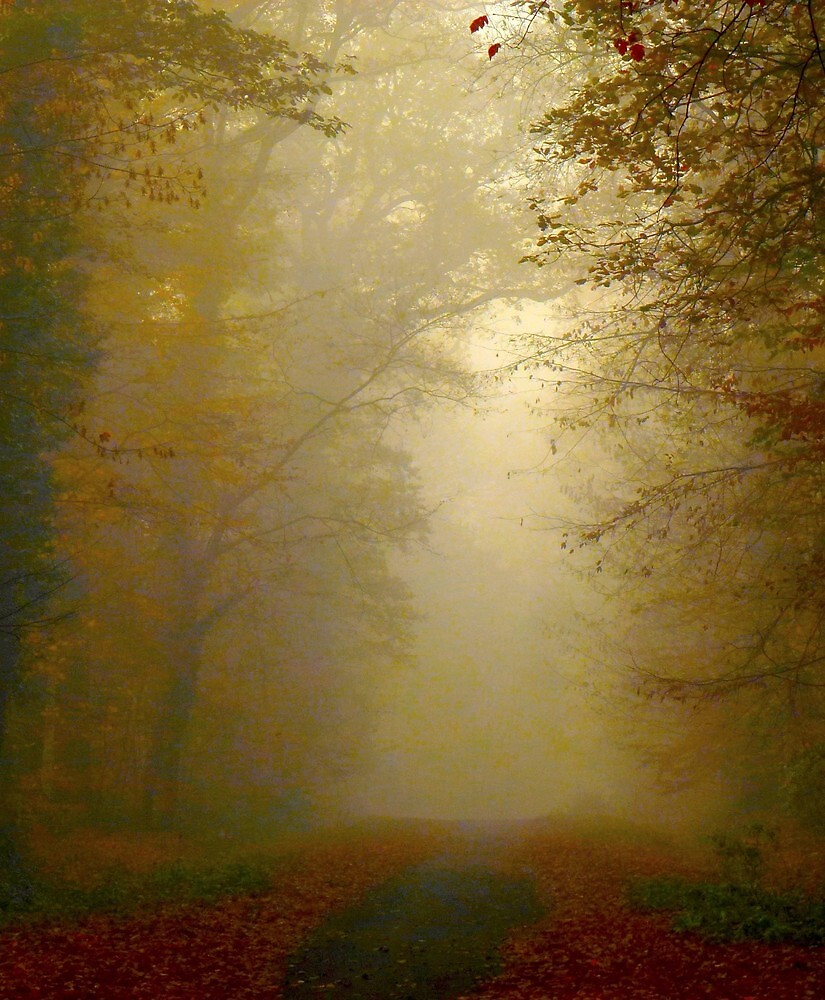 autumn fog in the forrest by supergold