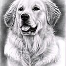 Golden Retriever Male Portrait by Nicole Zeug