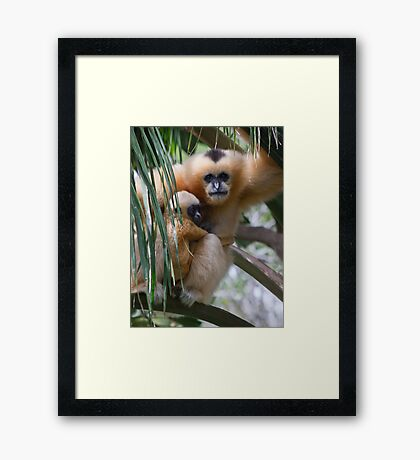 White Cheeked Gibbon and Infant Framed Print