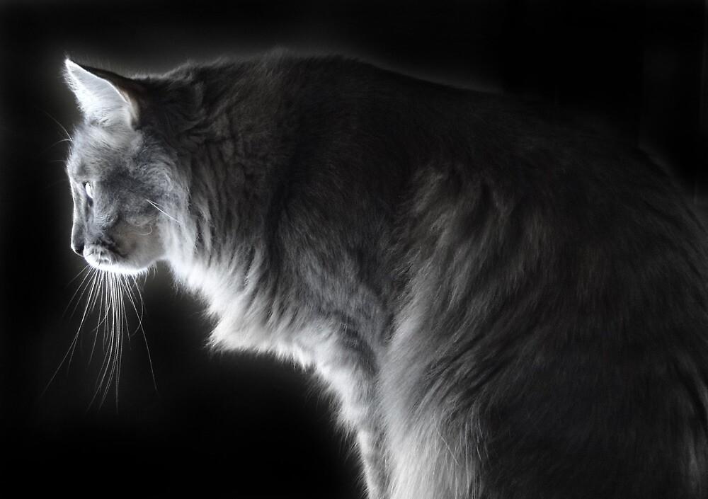 Predator by Carolyn  Fletcher