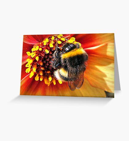 Honey Bee Greeting Card
