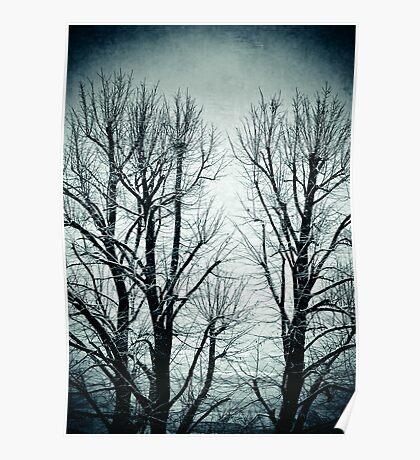 Winter trees II Poster