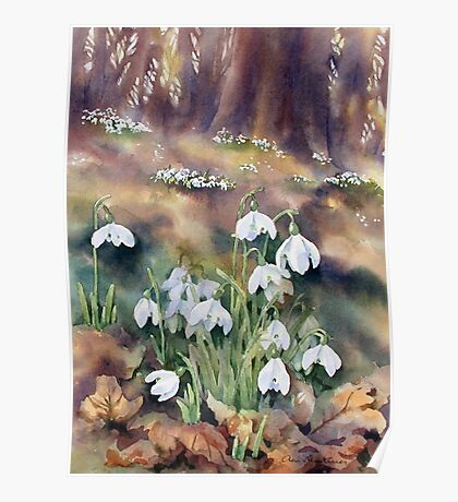 Snowdrops in the Wood Poster