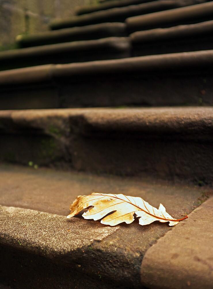 Leaf on Steps by CraMation