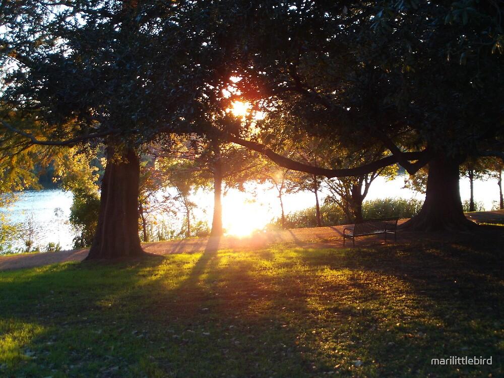 between two trees by marilittlebird