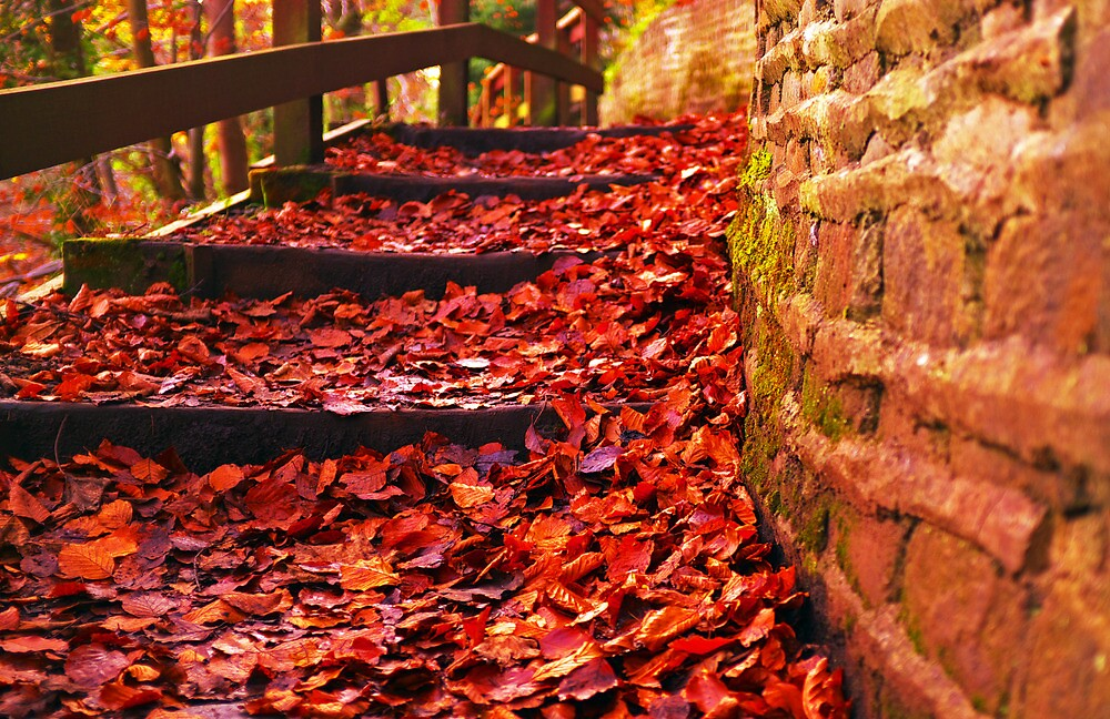 Leaves on Path by CraMation