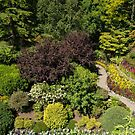 Aerial View, Butchart Gardens by SusanAdey