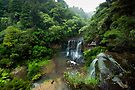 Mokoroa Falls Collection # 1 by Michael Treloar