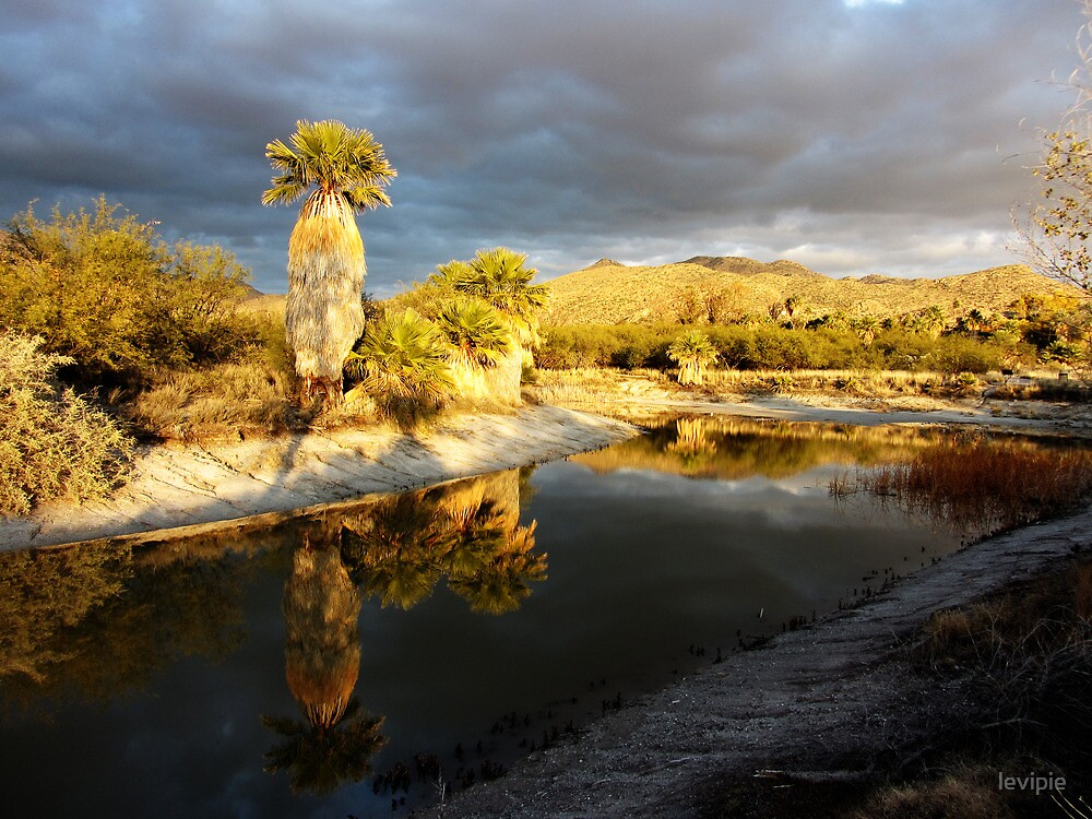 Agua Caliente Park back pond  by levipie