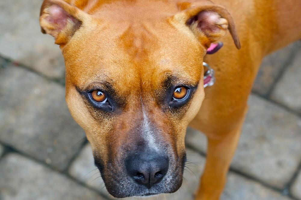 Puppy Eyes by Sebastian Sayegh