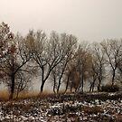 Cottonwoods 1 by David  Postgate