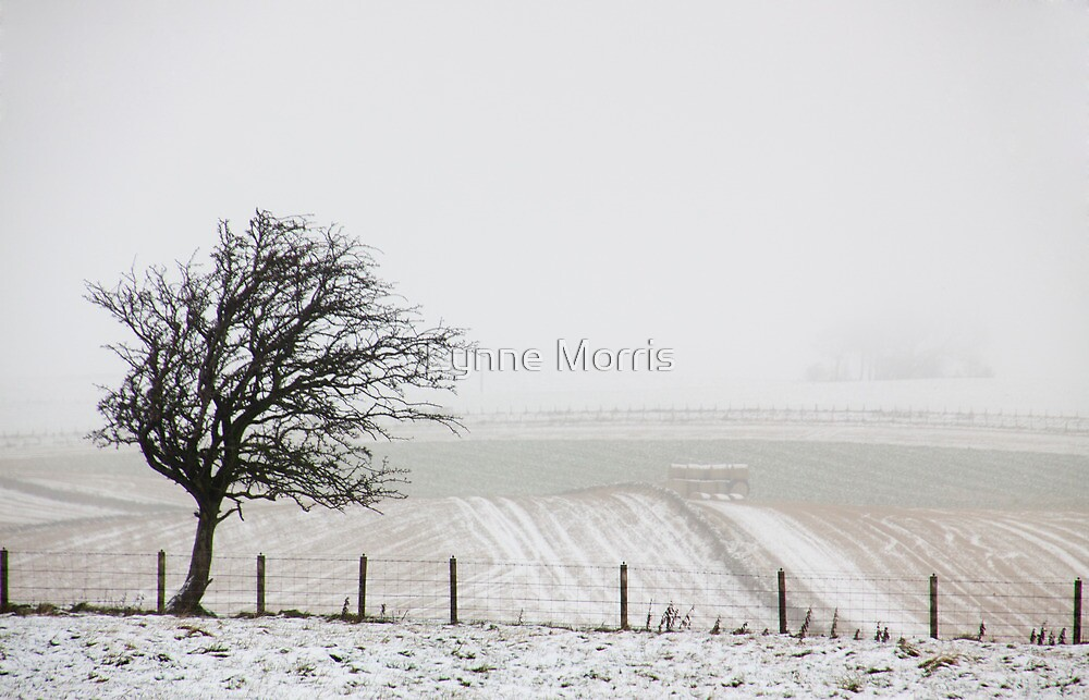 On A Cold And Foggy Morning by Lynne Morris