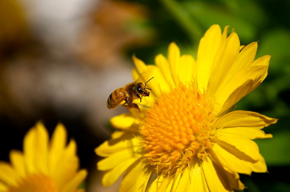 Bee by Sebastian Sayegh