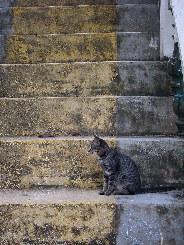 Cat on Steps by DeathsPirate