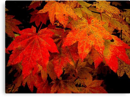Vine ~ Vine ~ Maple by Charles & Patricia   Harkins ~ Picture Oregon