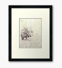Lonely moose sketch - pencil Framed Print