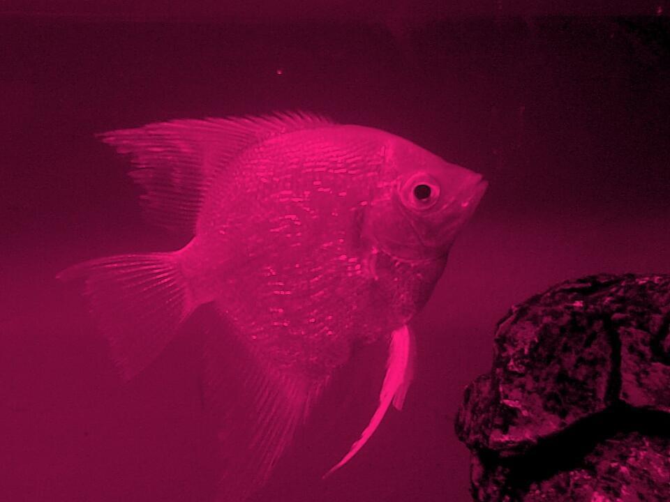 Ooh Fish..!!! by Prem Pawar