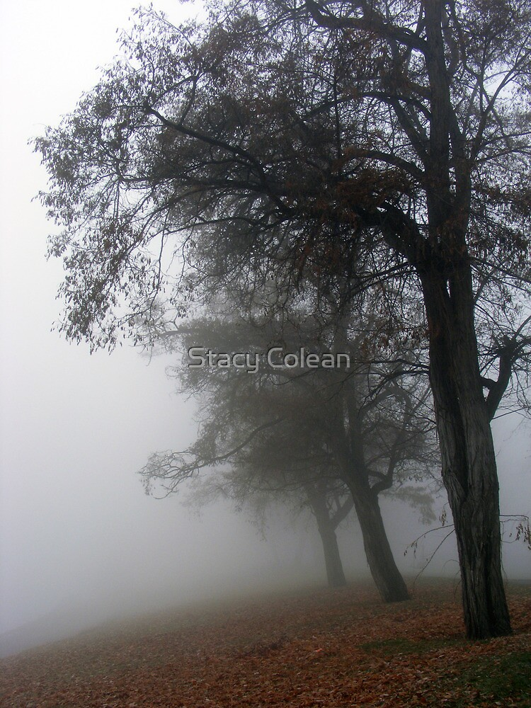 Misty view by Stacy Colean