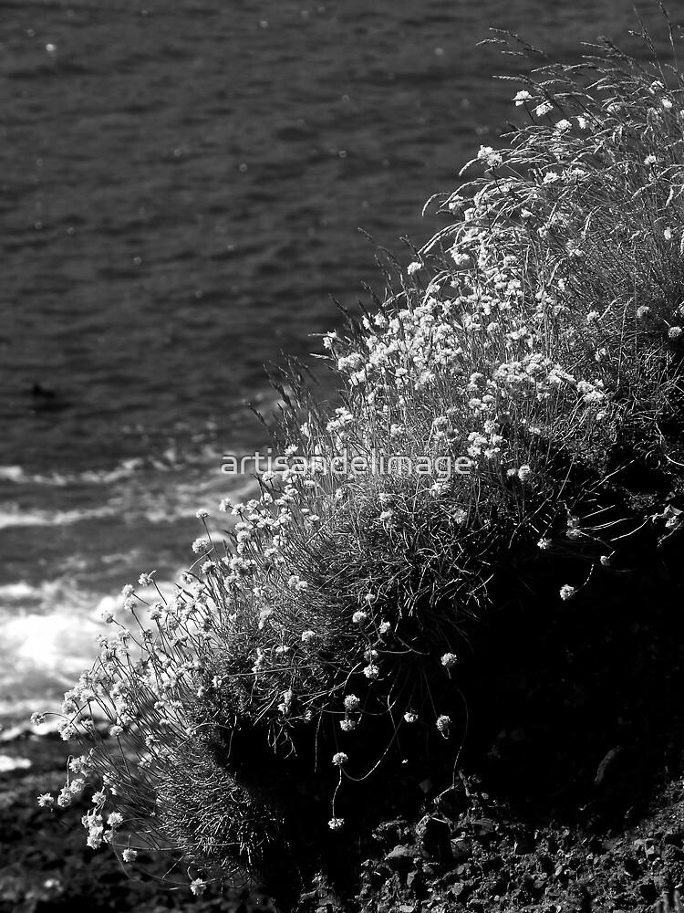 Coastal Monochrome ~ Part One by artisandelimage