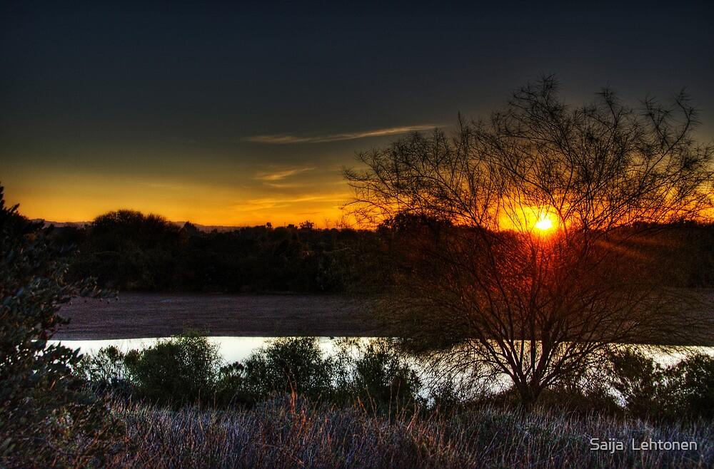 Morning Glory  by Saija  Lehtonen