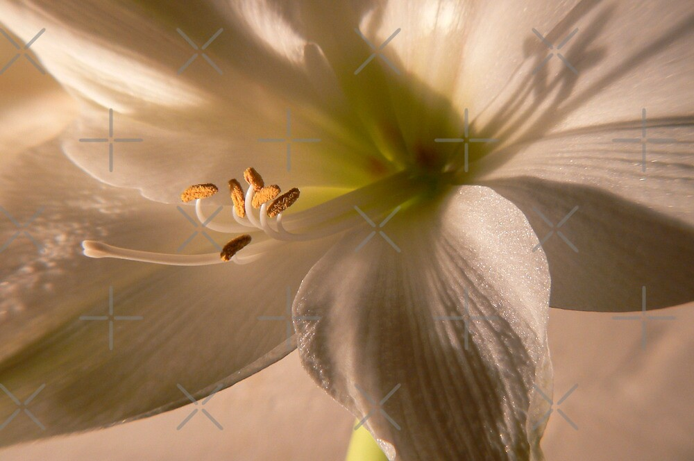 white lilly by LisaBeth
