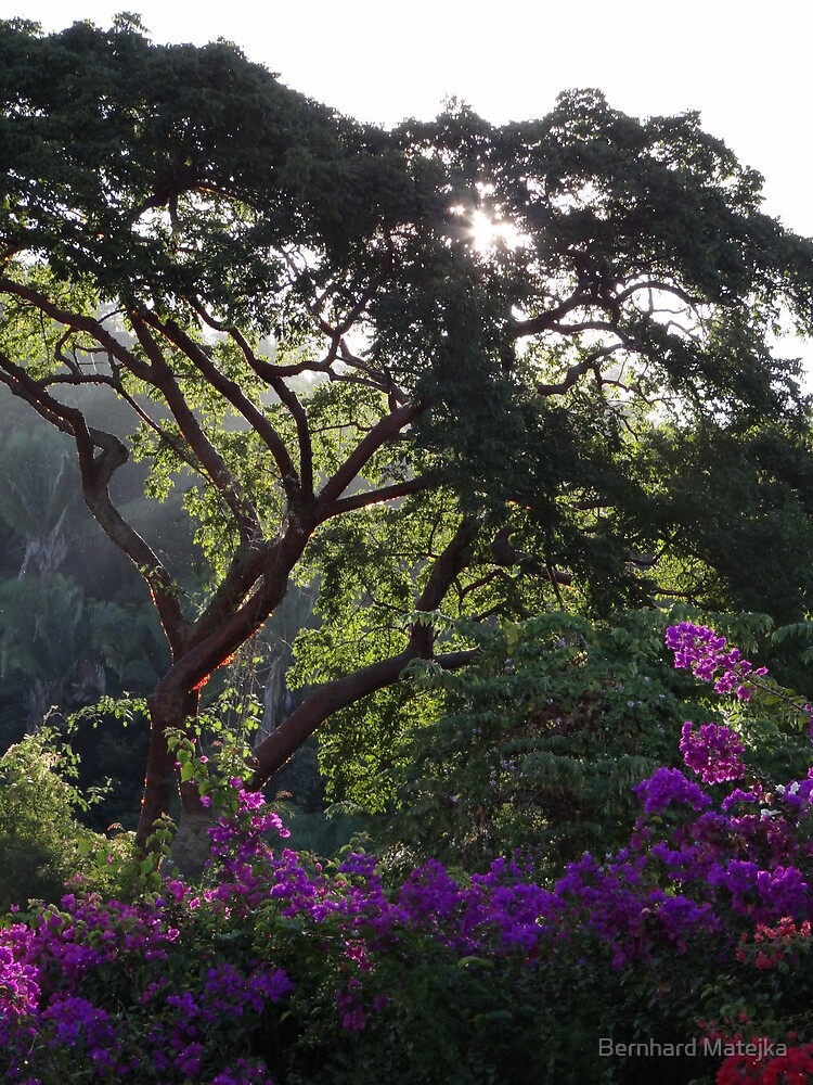 Jungle Tree With Bougainvilleas - Arbol De La Selva Con Buganvillas by Bernhard Matejka