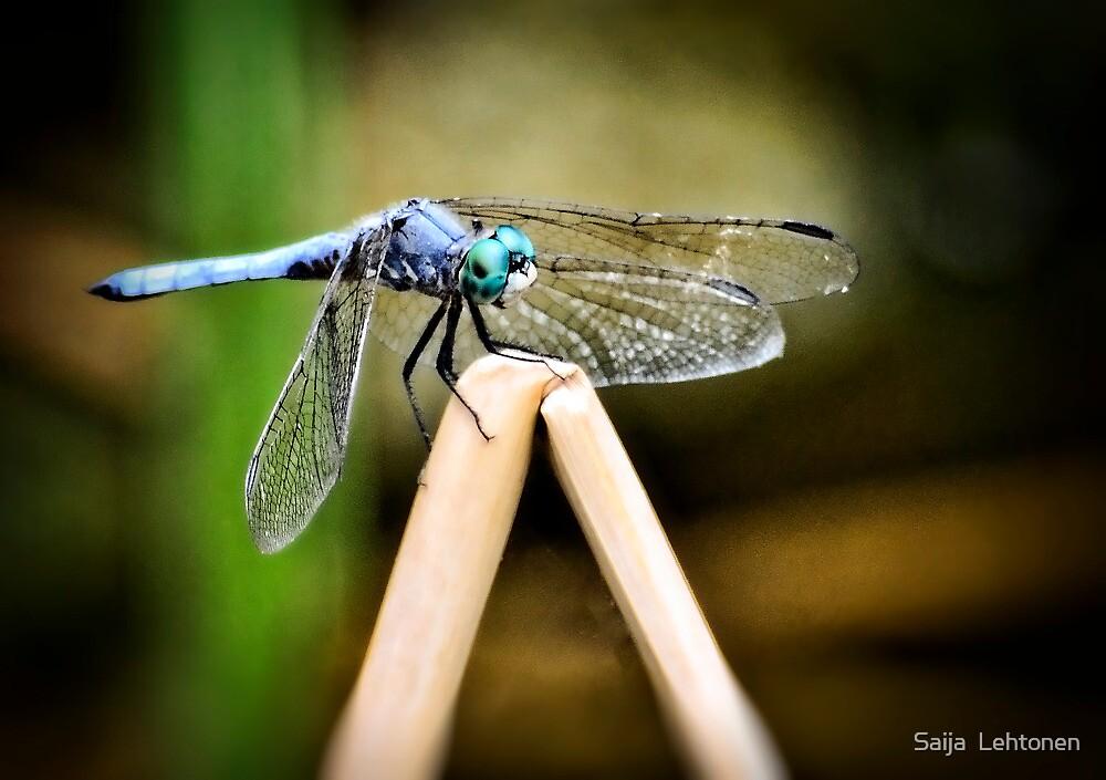 Blue Dragonfly  by Saija  Lehtonen