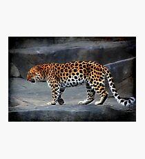 Leopard Fotodruck