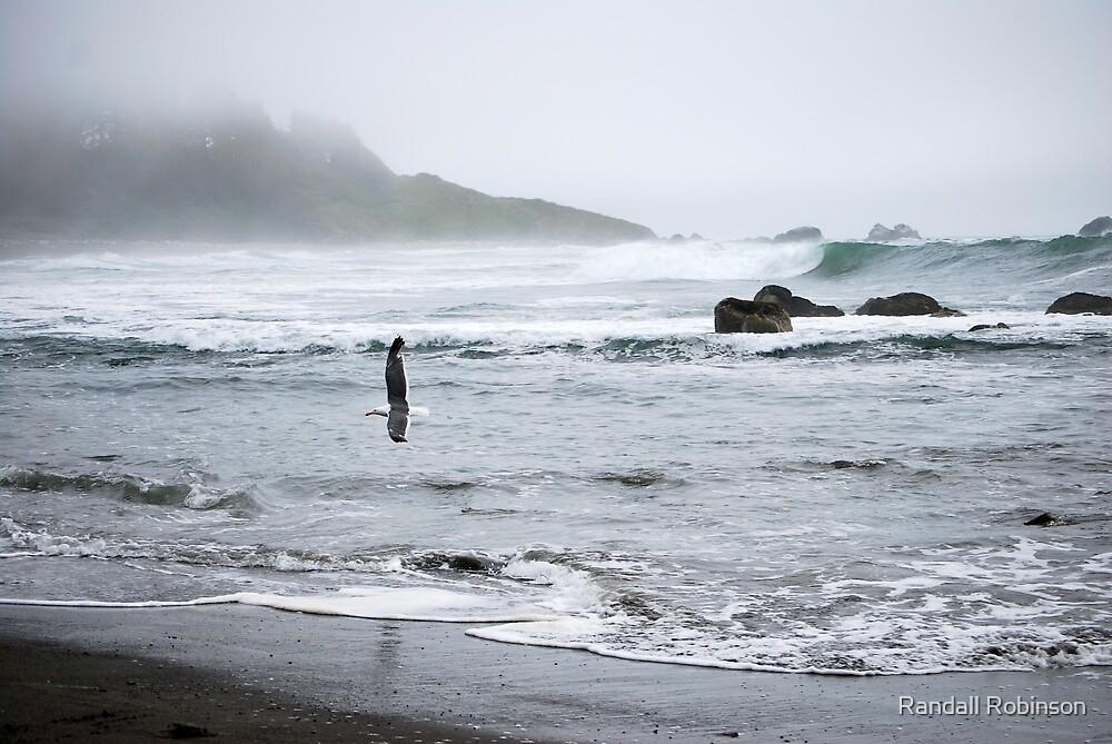 California Coast III by Randall Robinson