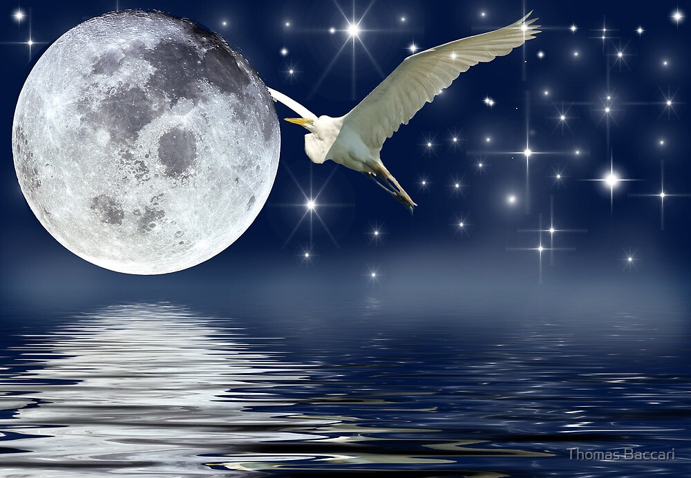 The Egret and the Moon on on a Starry Night by TJ Baccari Photography