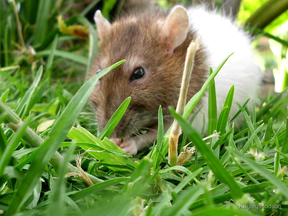 Nibbling the grass by Kayley Hodson