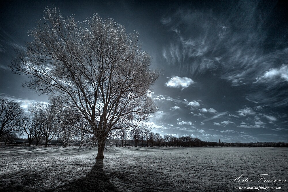 In the Shadow by Martin Finlayson
