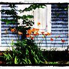 Spring Rain by Sam Warner