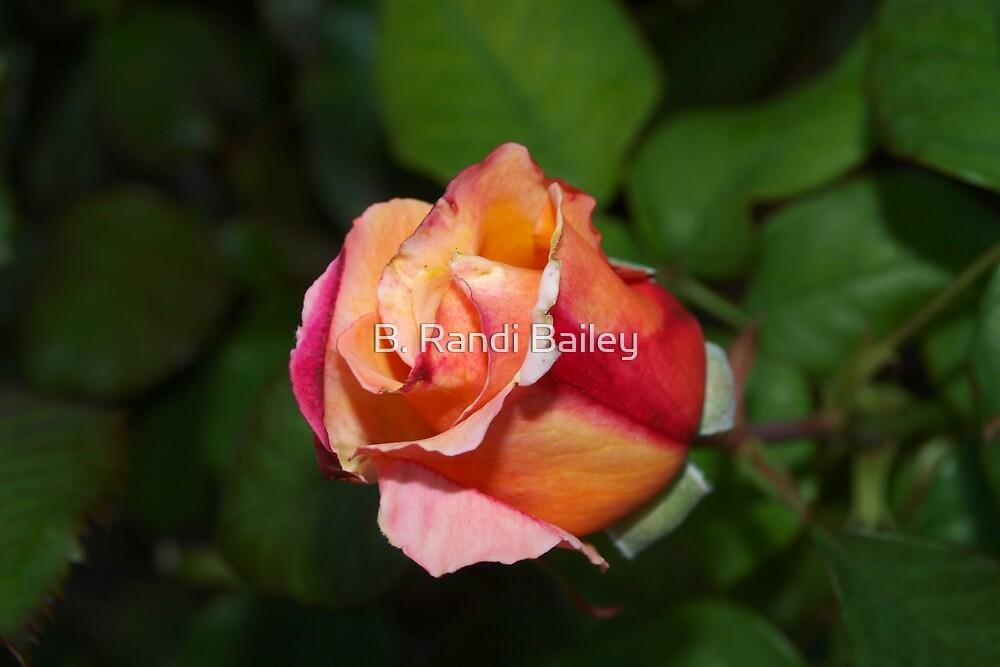 Tropical fruit-colored rosebud by ♥⊱ B. Randi Bailey