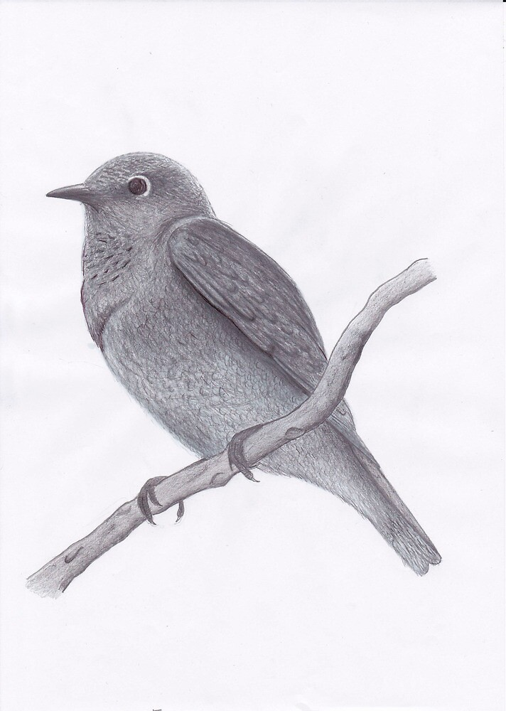 little bird by philipcruz